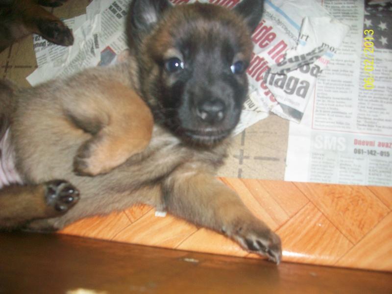 Ma chienne en gestation a des pertes gluante rouge un peu rose - Page 3 Pictur13