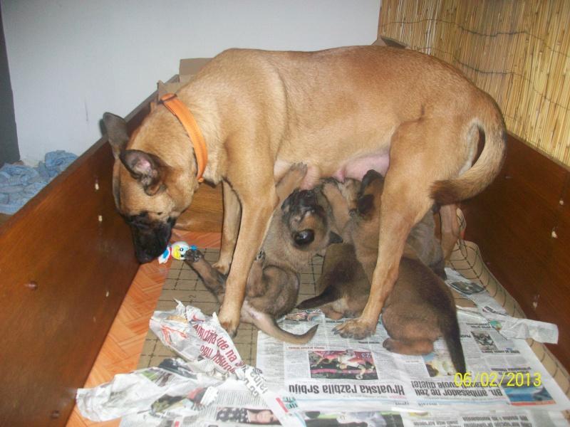 Ma chienne en gestation a des pertes gluante rouge un peu rose - Page 3 Pictur16
