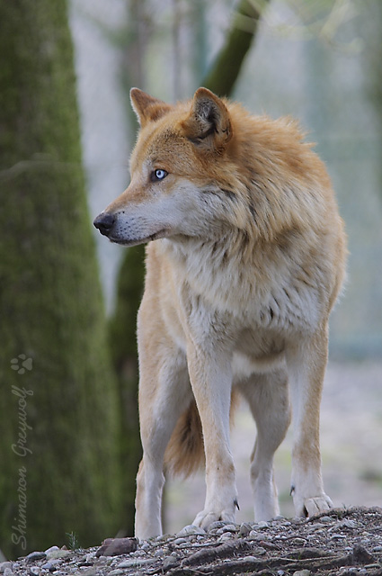 Howling 12020210