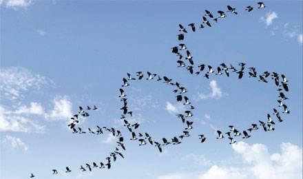 L'oiseau rare 23587_10