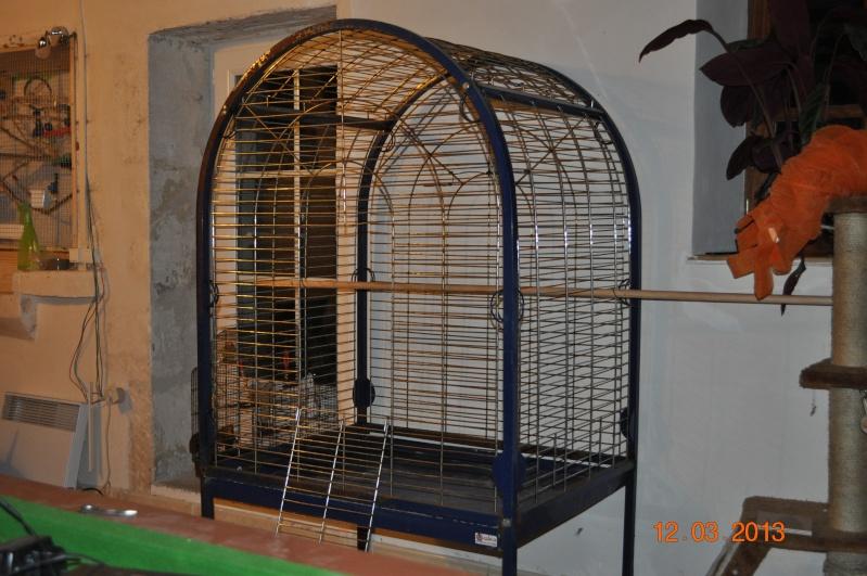 La cage de mon Youyou : Coco Dsc_0138