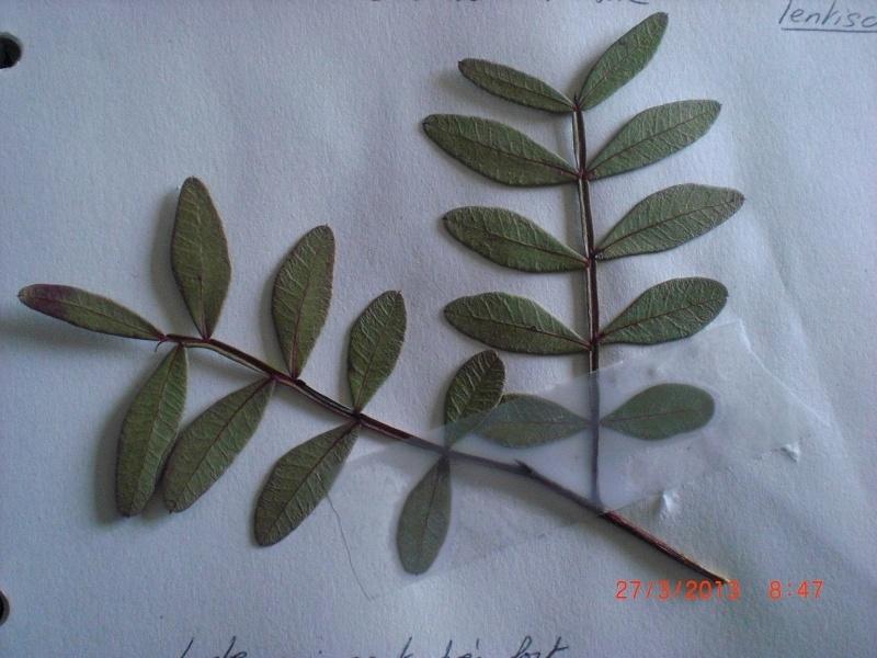 Arbuste Cimg4913