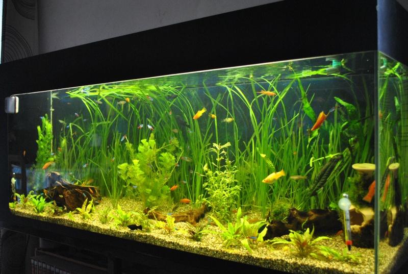 mon aquarium de 360 litres  - Page 2 Aq_00110