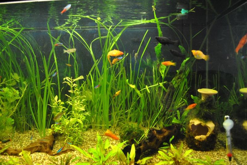 mon aquarium de 360 litres  - Page 2 Aq_00210