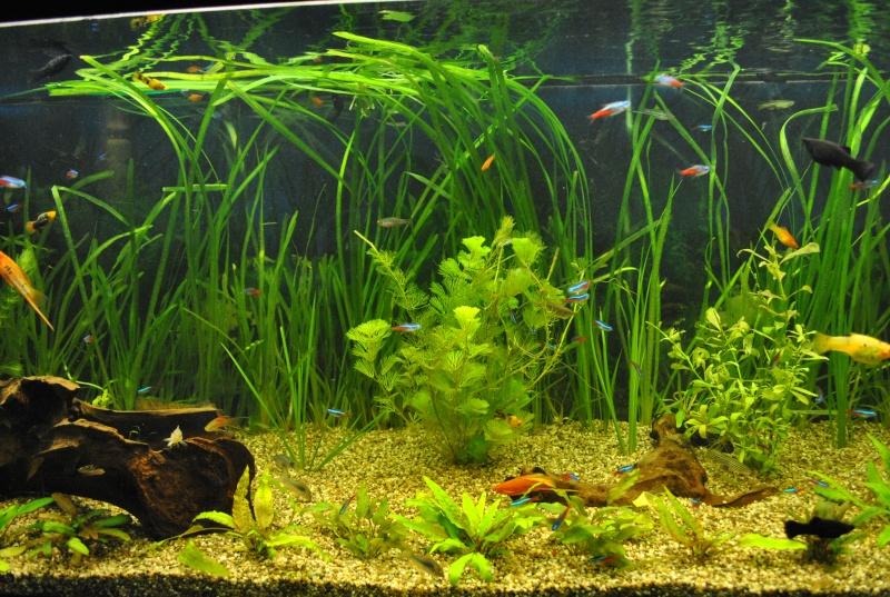 mon aquarium de 360 litres  - Page 2 Aq_00310