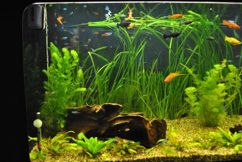 mon aquarium de 360 litres  - Page 2 Aq_00410