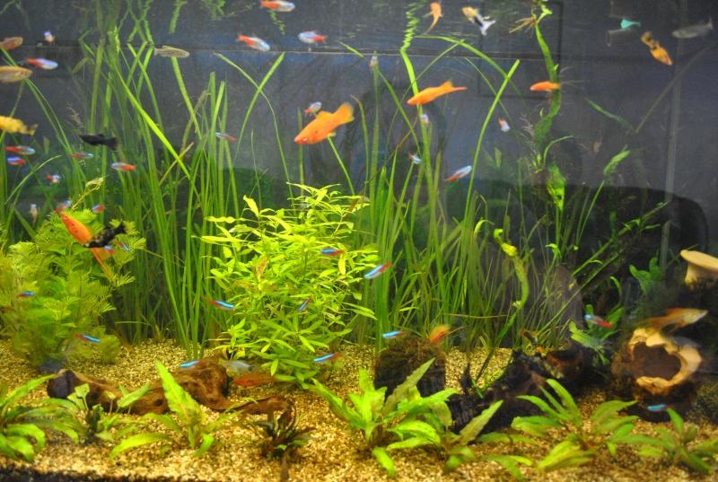 mon aquarium de 360 litres  - Page 2 Aqua1510