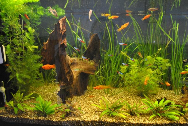 mon aquarium de 360 litres  - Page 2 Aqua1511