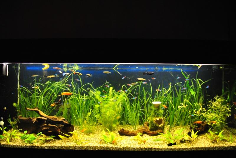 mon aquarium de 360 litres  - Page 2 Aqua_010