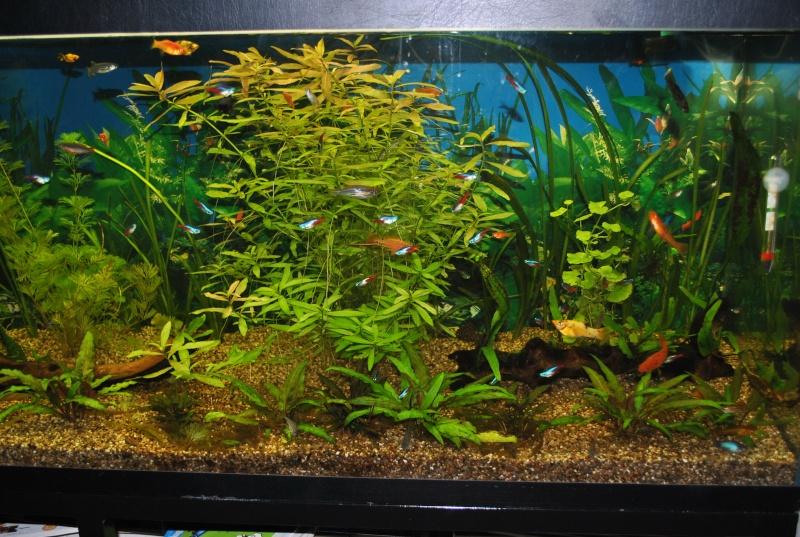 mon aquarium de 360 litres  - Page 2 Paques10