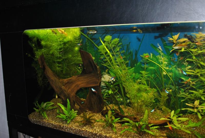 mon aquarium de 360 litres  - Page 2 Paques11