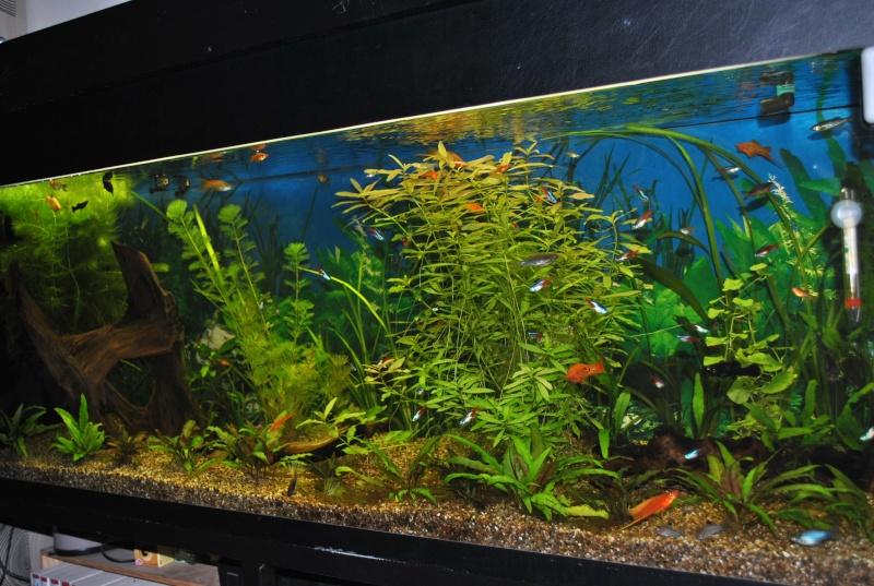 mon aquarium de 360 litres  - Page 2 Paques12