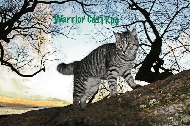 Warrior Cats RPG [Werbung] M7vytx10