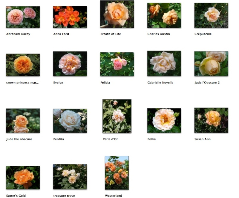 Orange et abricot Screen37