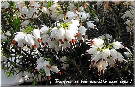 Bonjour bonsoir,...blabla Septembre 2013   - Page 7 Ma190310