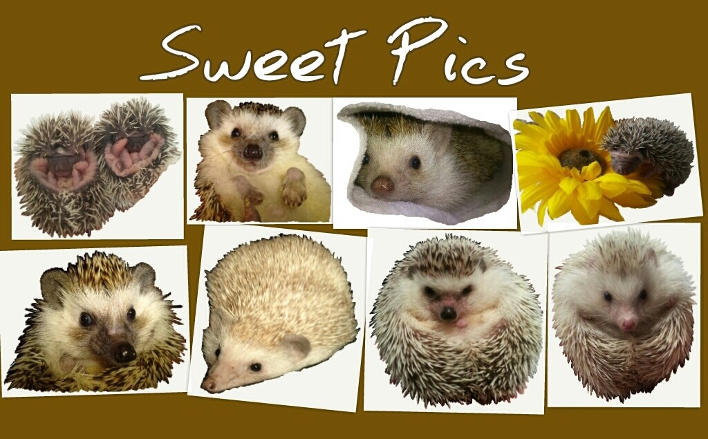 Sweet Pics