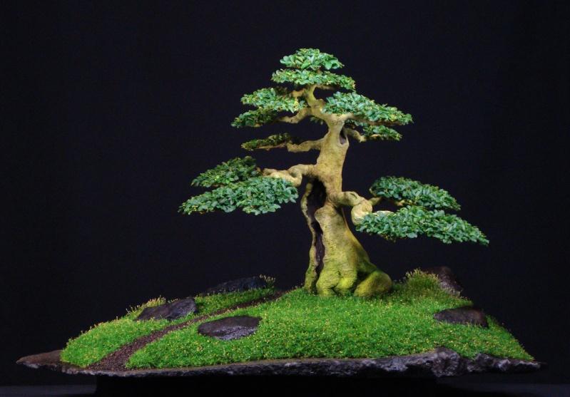 Le bonsai  Ligustrum sinense. Ligust10