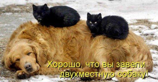 Собаки и кошки 65196110