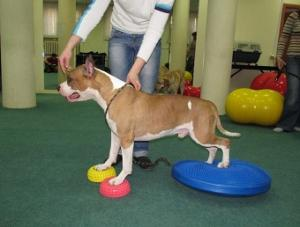 Мастер-класс по фитнесу на мячах для собак 6 Апреля — 7 Апреля Myachi10