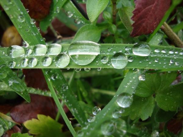 29 - La pluie !!! Dscmad10