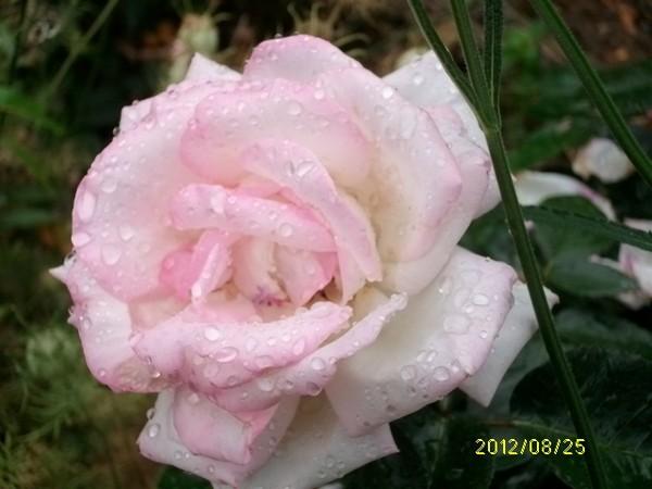 29 - La pluie !!! P_de_a10