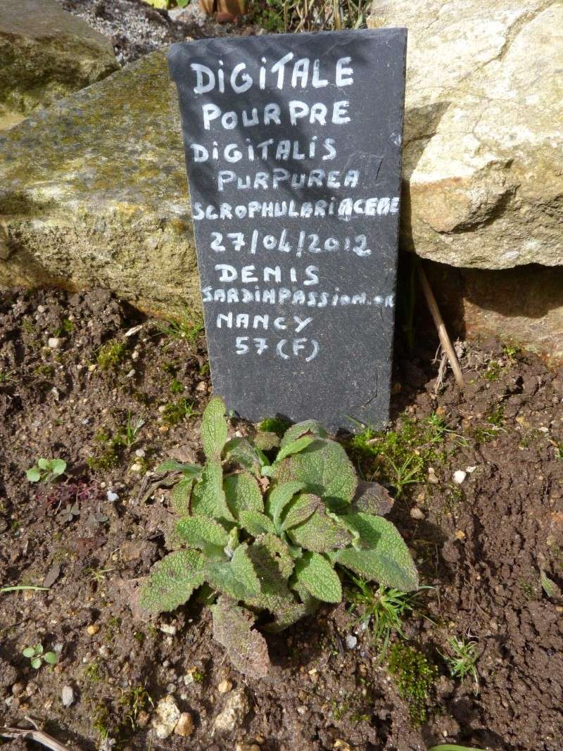 """Album photo  du jardin des poètes"""" troisième album"""" P1270020"""