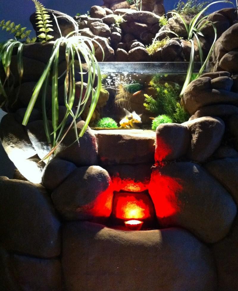 mon aquaterrarium actuel 60 Litres Photo11