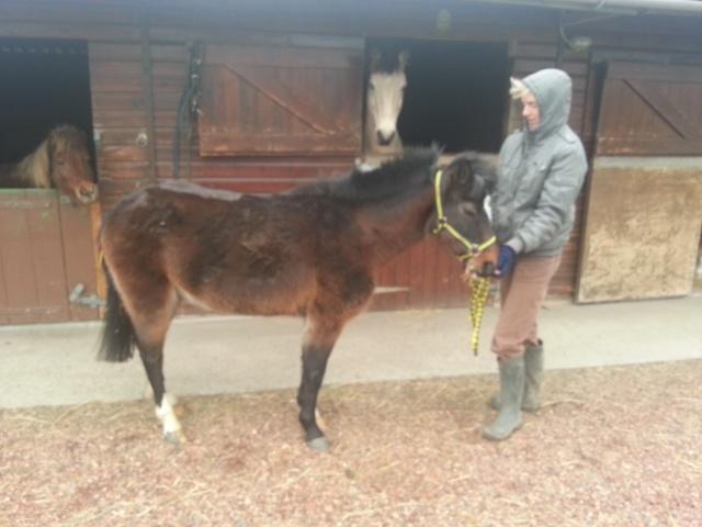PEPITA - ONC poney née en 2003 - adoptée en février 2013 par zoune 20130211
