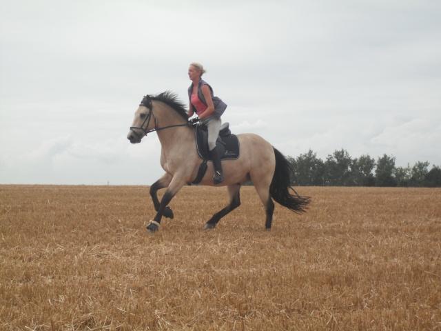 PEPITA - ONC poney née en 2003 - adoptée en février 2013 par zoune - Page 2 Dscf4311