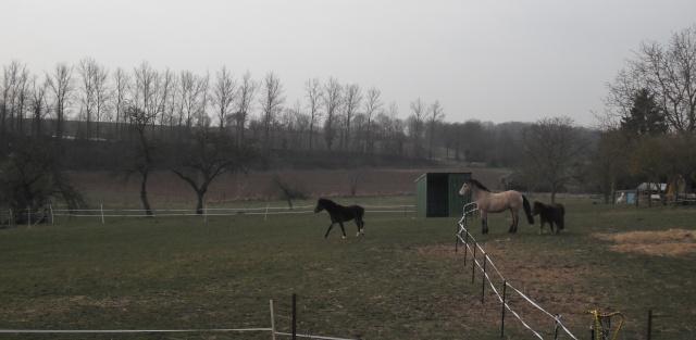 PEPITA - ONC poney née en 2003 - adoptée en février 2013 par zoune - Page 2 Dscf4813