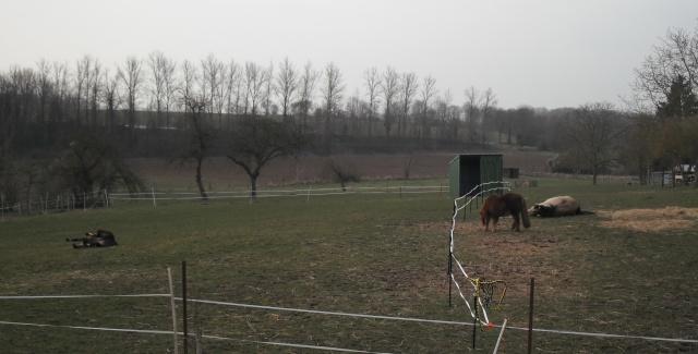 PEPITA - ONC poney née en 2003 - adoptée en février 2013 par zoune - Page 2 Dscf4814