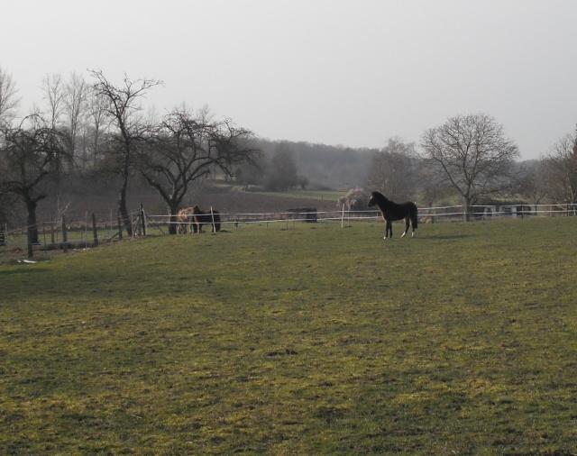 PEPITA - ONC poney née en 2003 - adoptée en février 2013 par zoune - Page 2 Dscf4816