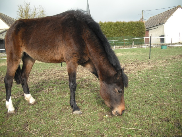 PEPITA - ONC poney née en 2003 - adoptée en février 2013 par zoune - Page 2 Dscf4817