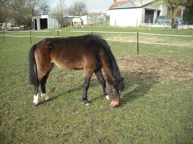 PEPITA - ONC poney née en 2003 - adoptée en février 2013 par zoune - Page 2 Dscf4818