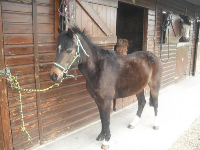 PEPITA - ONC poney née en 2003 - adoptée en février 2013 par zoune - Page 2 Dscf4825