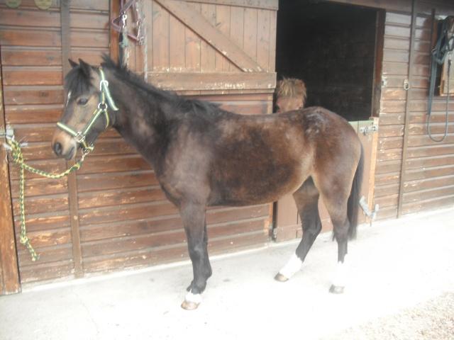 PEPITA - ONC poney née en 2003 - adoptée en février 2013 par zoune - Page 2 Dscf4826
