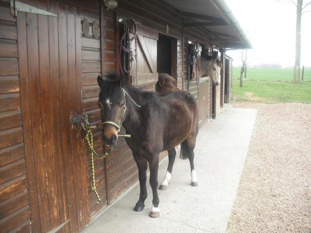 PEPITA - ONC poney née en 2003 - adoptée en février 2013 par zoune - Page 2 Dscf4827
