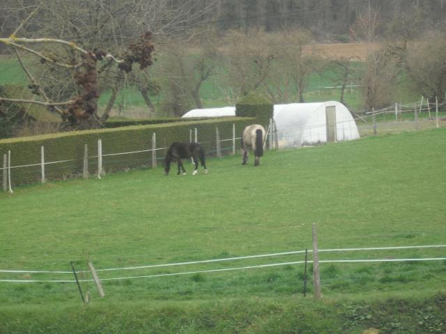 PEPITA - ONC poney née en 2003 - adoptée en février 2013 par zoune - Page 3 Dscf4830