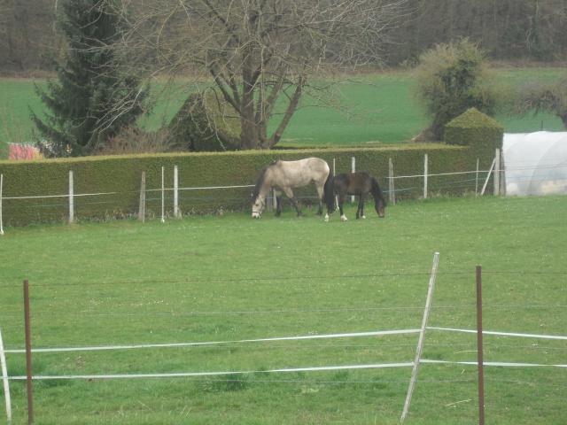 PEPITA - ONC poney née en 2003 - adoptée en février 2013 par zoune - Page 3 Dscf4831