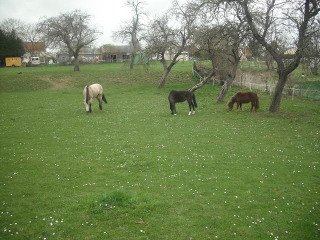 PEPITA - ONC poney née en 2003 - adoptée en février 2013 par zoune - Page 3 Dscf4832