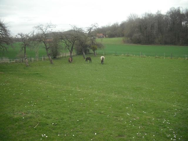 PEPITA - ONC poney née en 2003 - adoptée en février 2013 par zoune - Page 3 Dscf4834