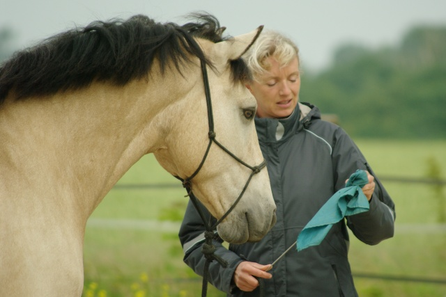 PEPITA - ONC poney née en 2003 - adoptée en février 2013 par zoune - Page 2 Imgp7010