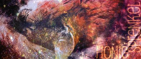 Moorwege und Sumpf - Seite 2 Honigs10