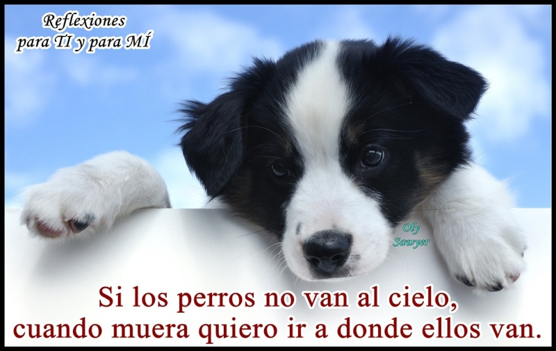 ¡Hola a todos! ¡Soy Gatumela! Perro_12