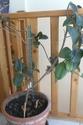 Plante toxique ? suis pas botaniste... Sam_0515