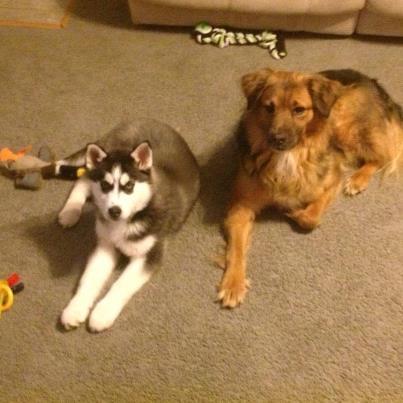Our new puppy Sasha Micsas10