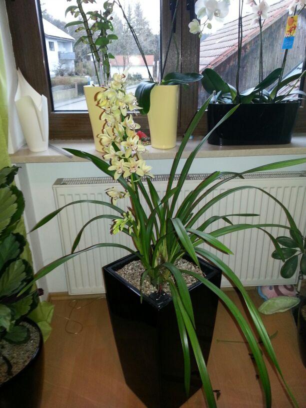 Welche Orchidee ist das? Img-2012