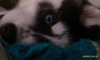 Bella~Luna the magnificant! AKA Luna, Boogie, or Woogie Imag1110