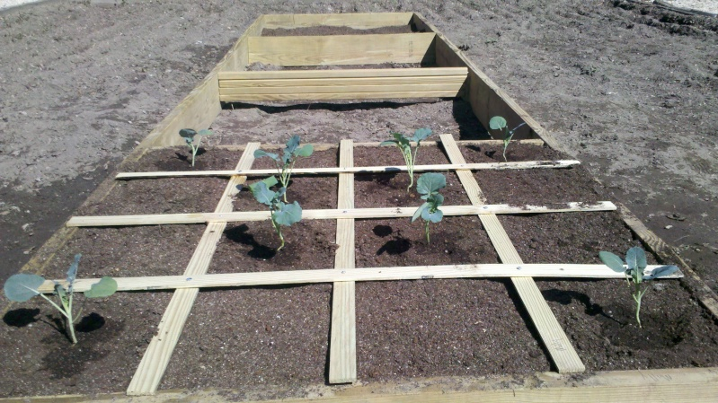 Beginner seeking soil advice 2013-014