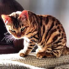 The Warrior Cats Toadki10